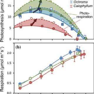 temperature response curve of rates of leaf respiratory co2 release r pdf the effects of rising temperature on the ecophysiology of tropical forest trees
