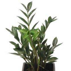 plantes vertes c 244 t 233 jardin