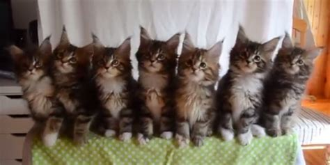 kittens move  purr fect synchronicity   robots