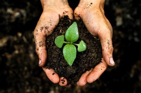 Polybag Ukuran 40 X 50 cara menanam dan budidaya jahe merah dalam karung atau