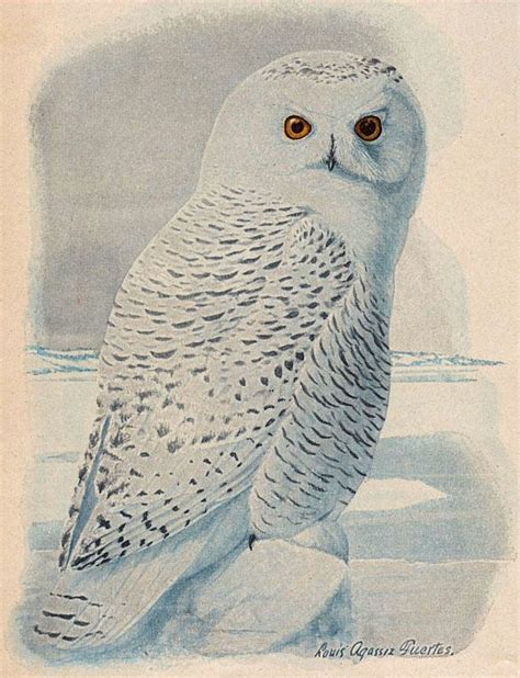 Paint Snowy Owls Tippytoe Crafts Preschool Books - free clip snowy owl the graphics