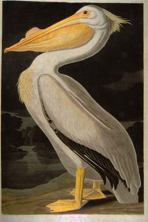 antique prints blog audubon s birds of america sets