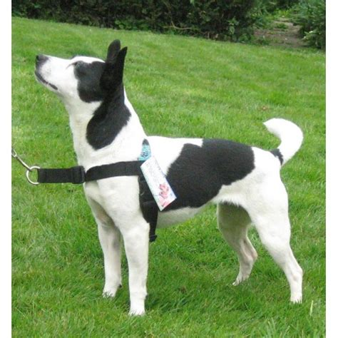 harness to stop pulling stop pull harness original leash cotswold pet services