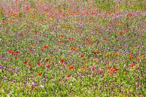 prati fioriti prati fioriti in valnerina 4 juzaphoto