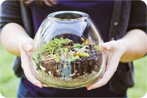 Handmade Terrarium - diy terrarium herwin s