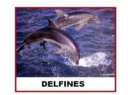 libro delfines amigos mejores 31 im 225 genes de proyecto delfin dolphins en educaci 243 n