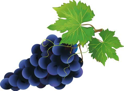 uva clipart grape clipart uva pencil and in color grape clipart uva