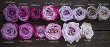 Different Types Of Purple types of purple roses