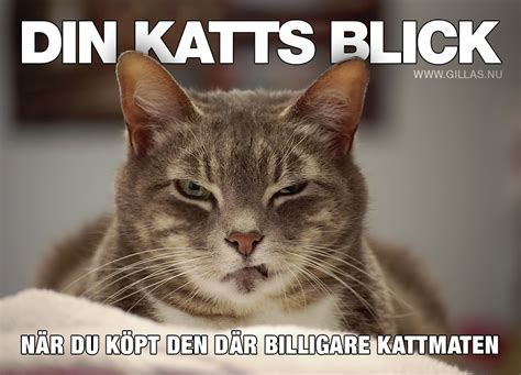 Hack Ar Det 228 R Nog Bara Din Katt Som Kan Leverera Den H 228 R Blicken