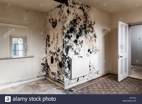 how to stop d in bedroom black mould on walls in bedroom 28 images how to get
