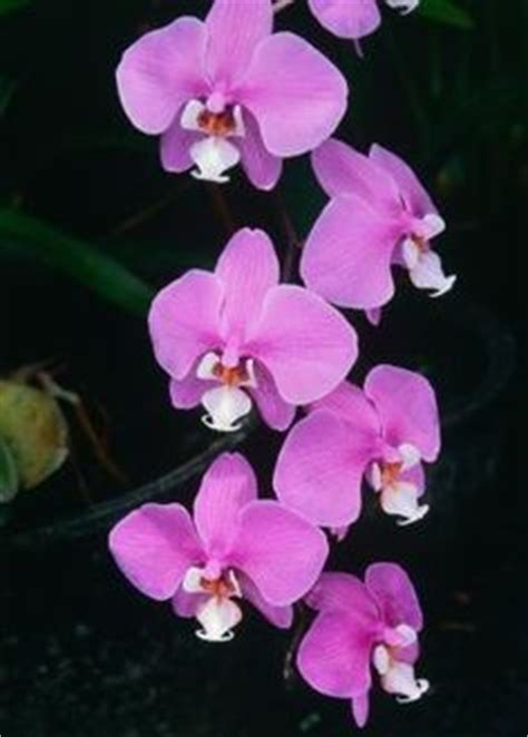 1000 images about how to not kill your orchid on pinterest orchids orchid plants and orchid