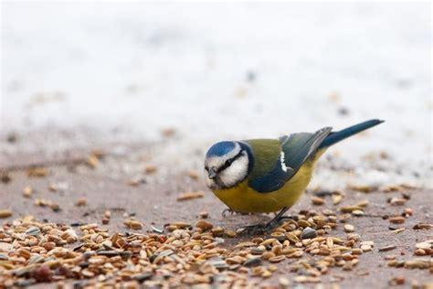 uccelli da giardino casette per uccelli fai da te casette da giardino