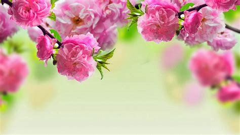 HD wallpapers 1080p widescreen Flowers   Nice Pics Gallery