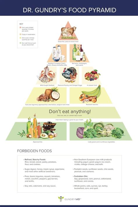 Dr Guillin Detox Protocol by Dr Gundry S New Food Pyramid For Vitality Quot The Plant
