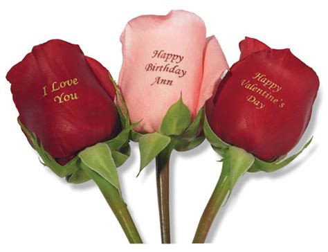 Valentines Day Roses That Speak To You by 180 175 187 Happy Valentin Day 187 175 180 175 187