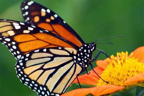 imagenes sobre mariposas fotos de mariposas de kinder imagenes con mariposas