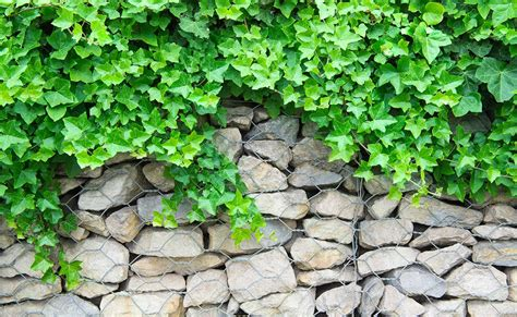 garden retaining wall systems best ideas about gabion retaining wall systems gabion