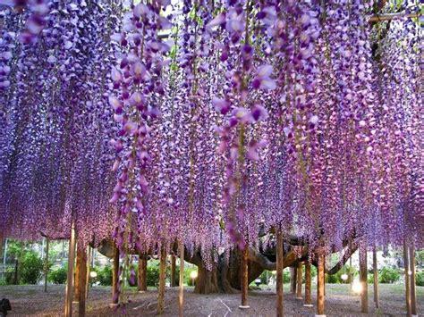 fiori per giardino fiori per giardino primaverili quali scegliere