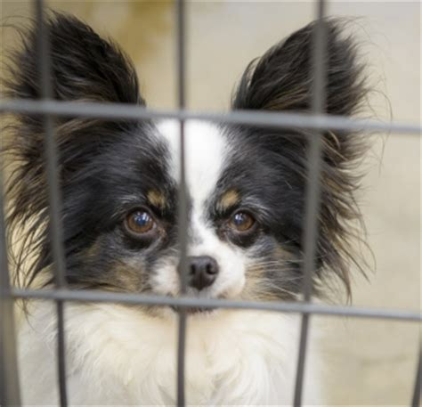 puppy mills in colorado colorado puppy mill rescue saves 91 dogs throughout the midwest national mill
