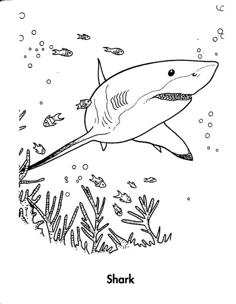 tiger shark coloring page free printable shark coloring pages for kids