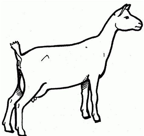 nubian goat coloring pages dairy goat clipart clipartxtras