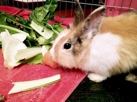 coniglio alimentazione alimentazione coniglio mondo carota