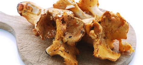 cucinare funghi finferli finferli cucinarefunghi