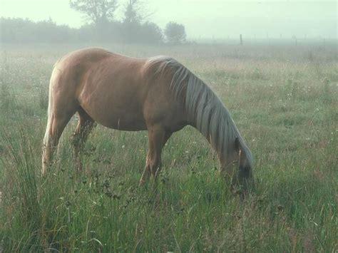 Фото павших лошадей
