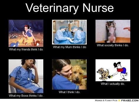 Nurse Meme Generator - veterinary nurse meme generator what i do animal