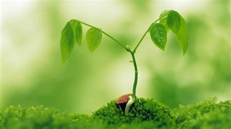 small plant extra wallpapers small green plant