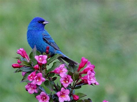 wallpaper blue with birds large blue bird wallpaper wallpapersafari