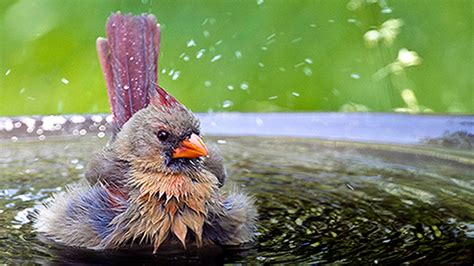 wwwwild bird photocom3gp backyard birders summer checklist the backyard naturalist