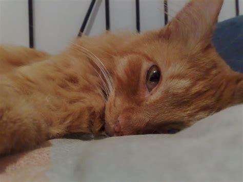 Obat Menyembuhkan Mata Kuning cara menyembuhkan infeksi mata kucing herbaltick