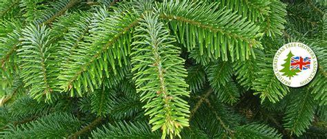 folding a fir tree clayton fold tree farm derbyshire cut your own trees