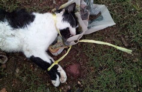 Cat Harness Anjing Kucing says this is the quot quot about miar president who rescued dogs from