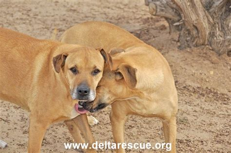 delta dogs meet the who rescued 900 dogs and 600 cats