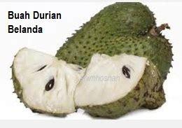 anim agro technology  tanam durian belanda
