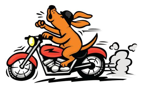 upaws dogs ride with the warthogs peninsula animal welfare shelter
