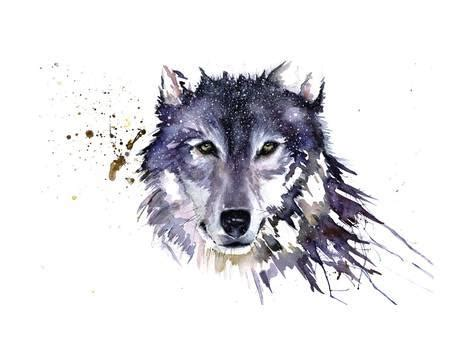 snow wolf giclee print by sarah stokes allposters.co.uk