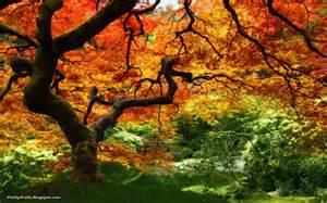 pretty walls download beautiful trees hd wallpapers free