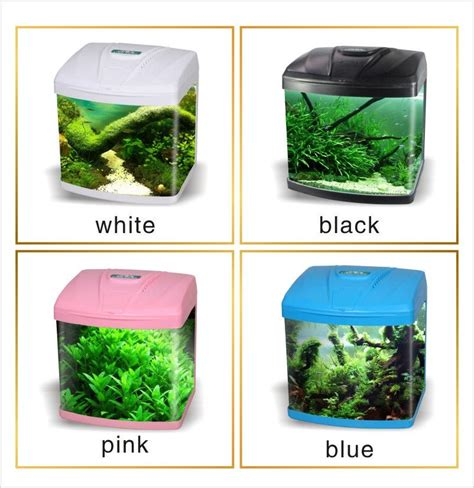 Dr Yoo Garden Grove Ca Small Home Aquarium Fish 28 Images Great Gold Fish