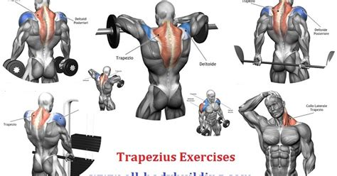 killer traps tips for impressive traps all