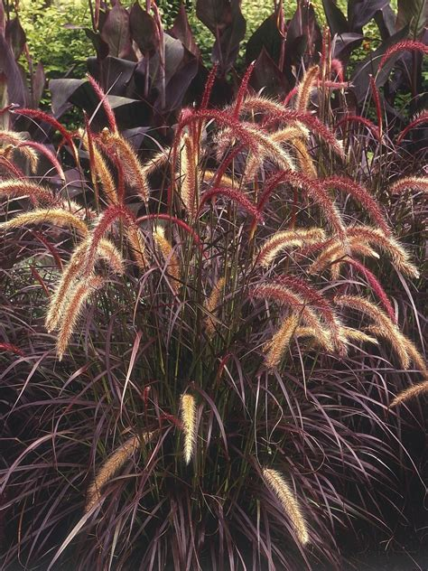 types of ornamental grasses diy garden projects garden