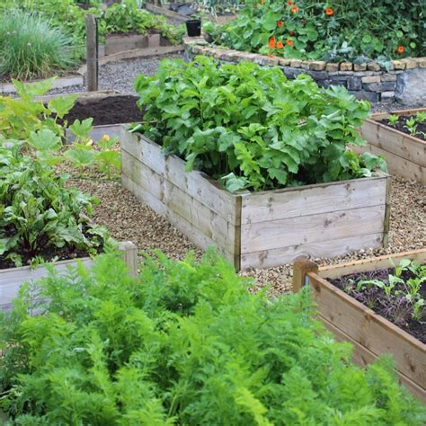 Raised Vegetable Gardening Timber Raised Vegetable Beds