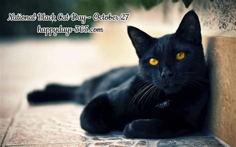 national black day 2017 national black cat day october 27 2017 happy days 365