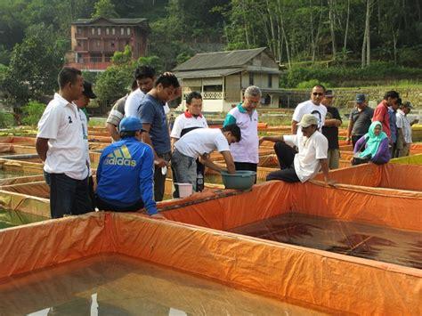 Pembenihan Lele Di Kolam Terpal pelatihan budidaya lele sangkuriang segmen pembenihan 2014 ternak lele sangkuriang