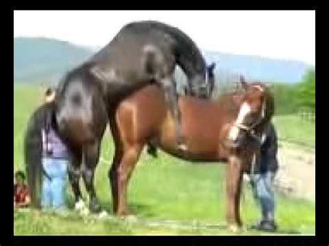 paarung paarung tiere pferde mating animals111478 youtube