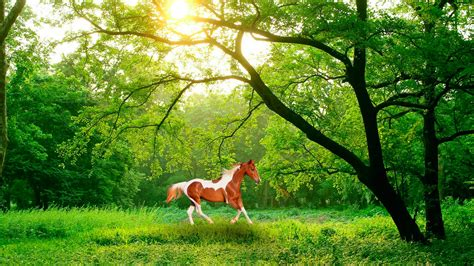 imagenes de paisajes y caballos fondo pantalla bosque y caballo