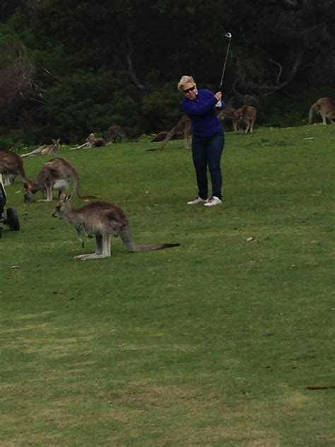 kangaroo swing golf on the great ocean road melbourne