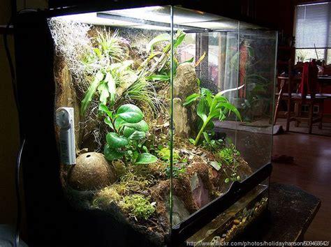 large terrarium ideas terrariums  wardian cases